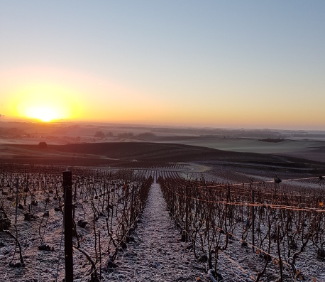 Vineyards of Champagne in January
